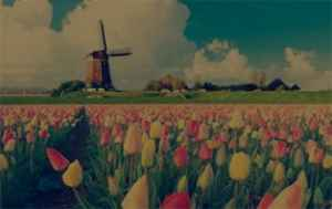 Scholarships in  Netherlands