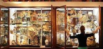 Funded Volunteer Opportunity with ESC at VU Museum of Zoology in Lithuania