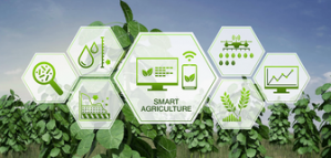 SFIAR Competition in Agricultural Research for Development to Win CHF 5'000