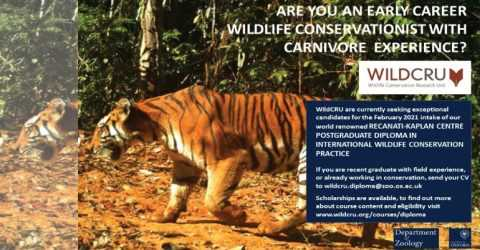 Recanati-Kaplan Centre Postgraduate Diploma in International Wildlife Conservation Practice